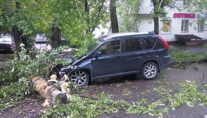 Стихия повалила в Москве почти сотню деревьев, повредив 20 машин