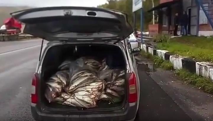 За перевозку 340 килограммов омуля мужчину оштрафовали на 500 рублей