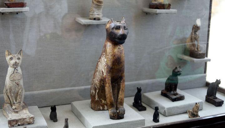 В Египте найдены двести бальзамированных кошек и первые мумии насекомых