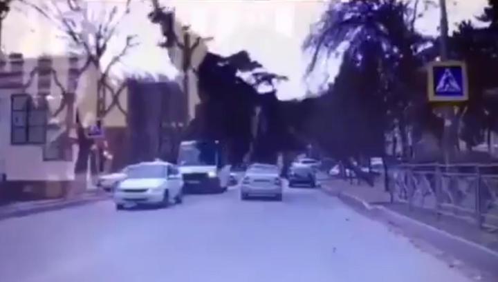 Массивная ель рухнула на маршрутку в Кисловодске