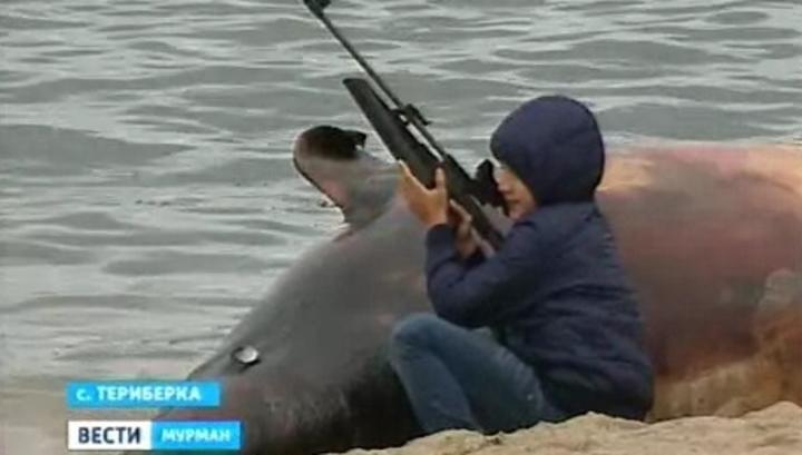 Российские экологи призывают запретить китобойный промысел