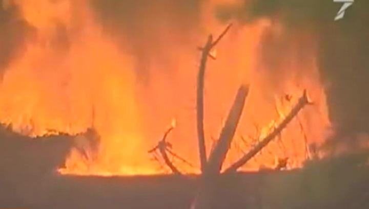 Полугодовой ущерб от лесных пожаров в России составил 2,4 миллиарда рублей