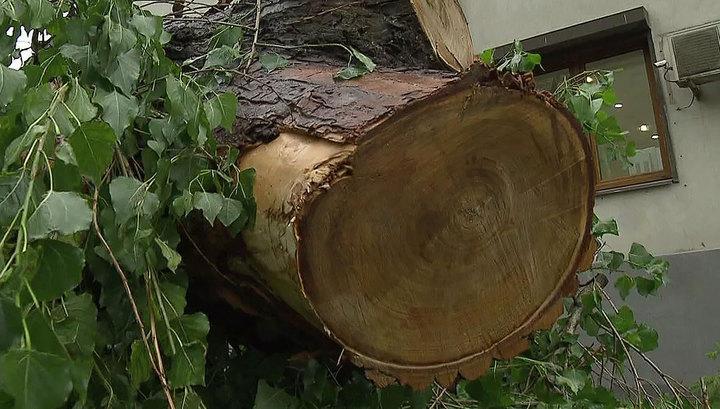 Московский ветер повалил 40 деревьев и повредил 23 машины