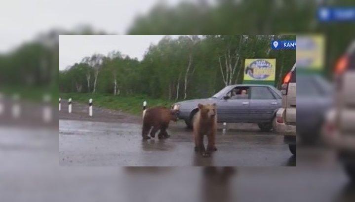 Жители Дальнего Востока испуганы нашествием медведей на Камчатке