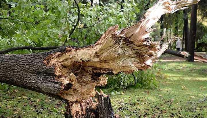 В Краснодаре при падении дерева на территории детского сада пострадали трое человек