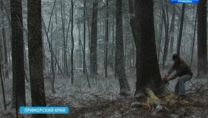 Приморские браконьеры попали в объектив видеокамеры