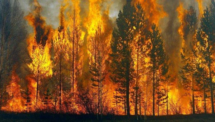 В зоне ЧС в Тайшетском районе горит 2,7 тысячи гектаров леса