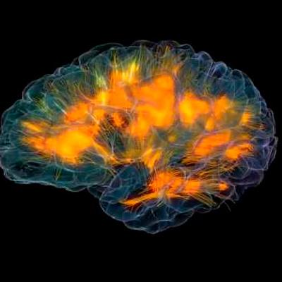 Долгое пребывание в одиночестве уменьшает головной мозг
