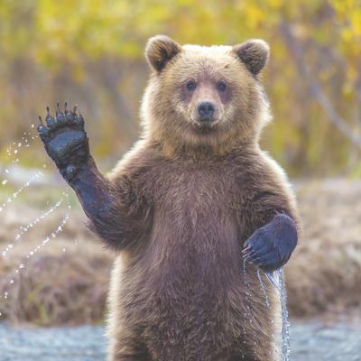 В Приморье найденный в курятнике гималайский медвежонок-сирота попал в полицию