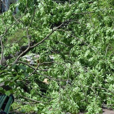 Восемь деревьев упали в разных округах Москвы из-за сильного ветра