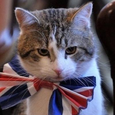 Кот проехал через половину Канады в посылке