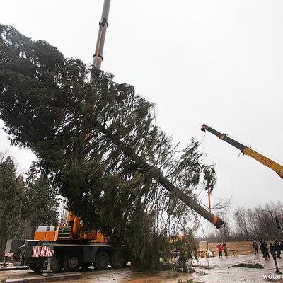 На Манежной площади устанавливают 20-метровую новогоднюю елку