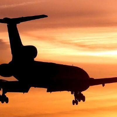 Муравьи атаковали пассажиров самолета, летевшего из Венеции в США