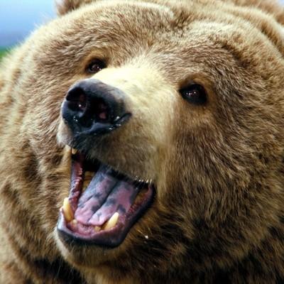 Медведь забрёл сегодня утром на один из рынков города Елизово на Камчатке
