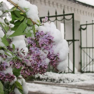 Столицу Ямала Салехард за неделю до лета накрыл снегопад
