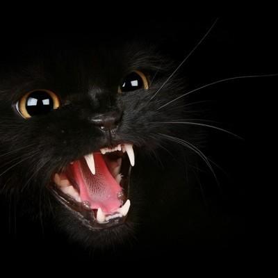 Обнаружена главная опасность кошек для человека