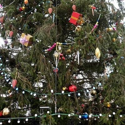 Главную новогоднюю ель России доставят в Кремль 17 декабря