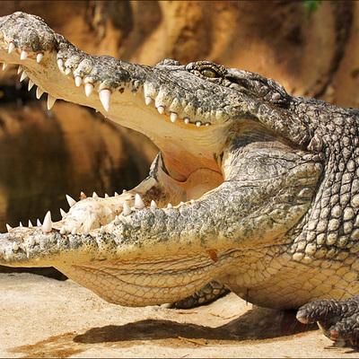 В подвале жилого дома в Петербурге нашлинильского крокодила