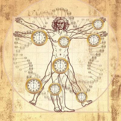 Сонная артерия выдаёт биологический возраст человека - Вести.Наука