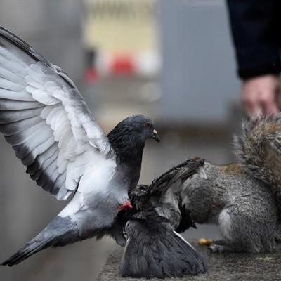 Зимовать на московских водоемах остались около 10 тысяч птиц