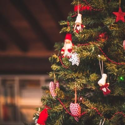В Подмосковье срубили главную новогоднюю ёлку России