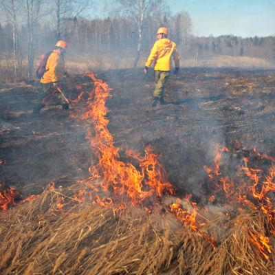 Ситуация с природными пожарами в Забайкальском крае остается сложной
