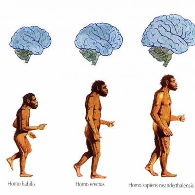 Переедание является следствием эволюции человека и среды его обитания