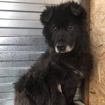 Домики для собак в столичном магазине не смогли стать постоянной услугой