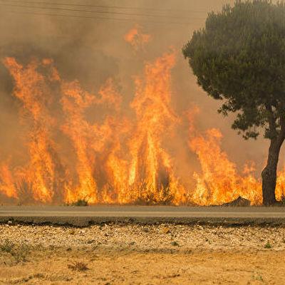 Пожар на Канарских островах уничтожил 12 тысяч гектаров леса