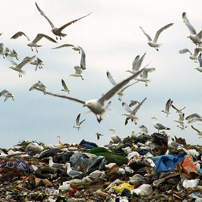 Чайки превратили британский необитаемый остров в свалку