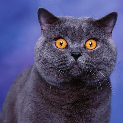 В России впервые изучили геном коронавируса, полученный от кота