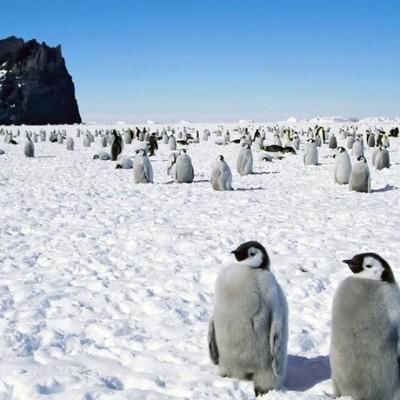 Россия гордится поколениями людей, которые посвятили свою жизнь изучению Антарктиды