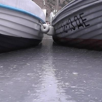 Балаклавскую бухту в Крыму заполонили тысячи медуз