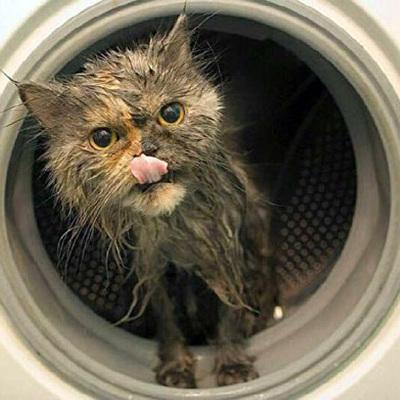 Московские спасатели освободили кошку из стиральной машины