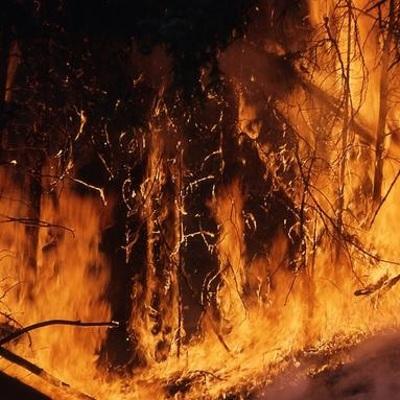 Около 200 тыс гектаров леса охвачено огнем на Камчатке