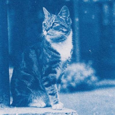 Опубликованы снимки котов из «капсулы времени»