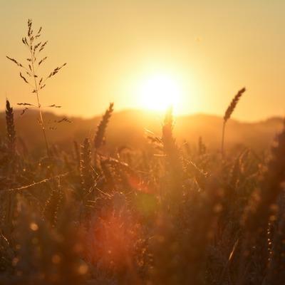 В Северном полушарии Земли завтра наступит летнее солнцестояние