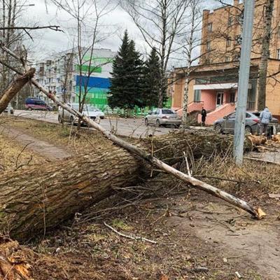 В Москве из-за непогоды упали около двух десятков деревьев