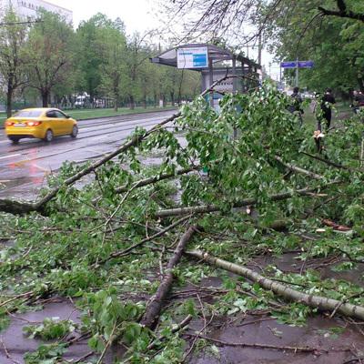 Около 100 деревьев повалено сильным ветром в Подмосковье