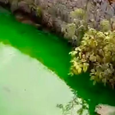 Вода в Химкинском водохранилище окрасилась в кислотно-зеленый цвет