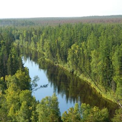 Правительство одобрило проект десятилетней Стратегии развития лесного комплекса