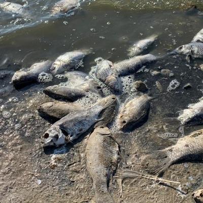 Массовая гибель рыбы в водохранилище Калмыкии произошла из-за снижения уровня воды