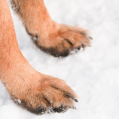 Четвертое за последний месяц нападение собак на людей произошло в Улан-Удэ