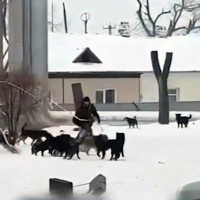 В Коми свора бездомных собак напала на четырёхлетнюю девочку