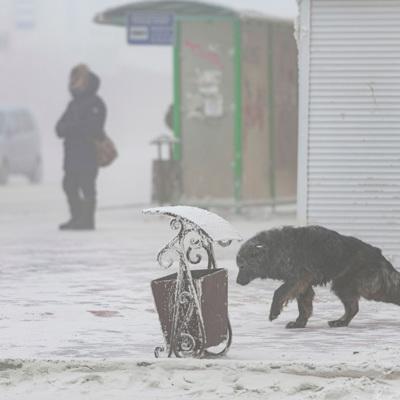 В Якутске введен режим повышенной готовности из-за снегопада