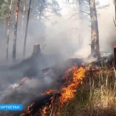 За последние сутки в России потушены лесные пожары площадью 1 732 га