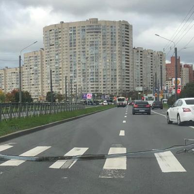 Более 60деревьев повалил сильный ветер в Петербурге