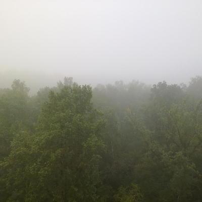 Трехлетний мальчик пропал в лесу в Омской области