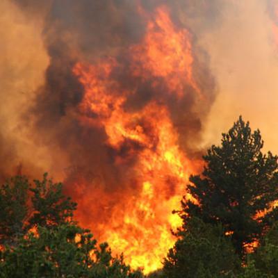 Жители Канады покидают свои дома из-за лесных пожаров