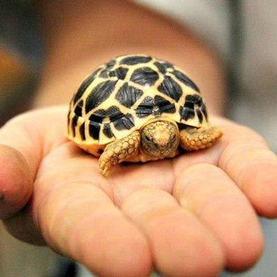 Четыре тысячи черепах спасли в Оренбургской области